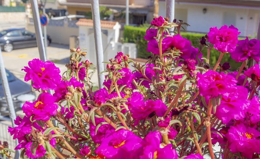 Apartamento en Segur de Calafell - Fotografia nº 16
